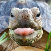 Tortoise (@TortoisesDaily )