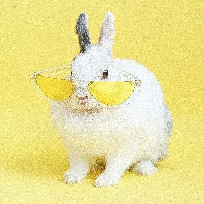 Niet een konijn