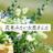 hana_koi_jp