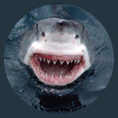 Sharklady 🦈