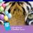 tigershowcases avatar