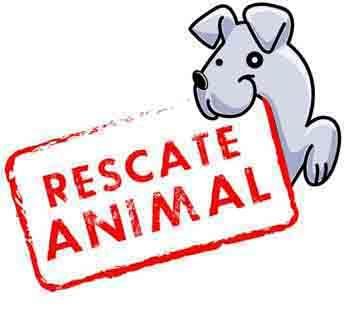 Historias conmovedoras de Rescate de Animales