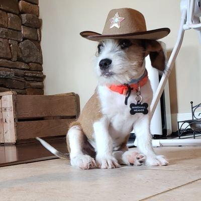 Texas Marshall Dylan