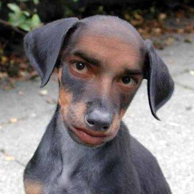 MAGA Puppy