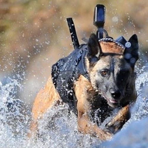 seal team 6 dog sealteam6dog twitter