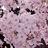Flower1 012 normal