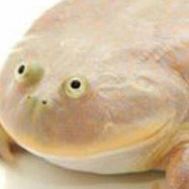 Pog Frog