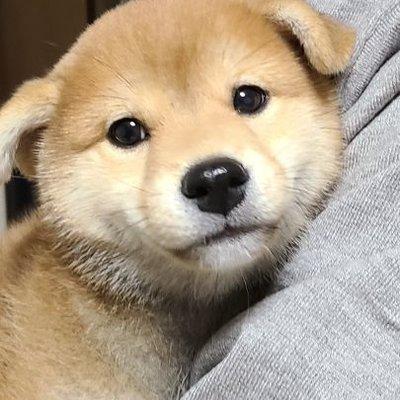 犬 @sss_inu