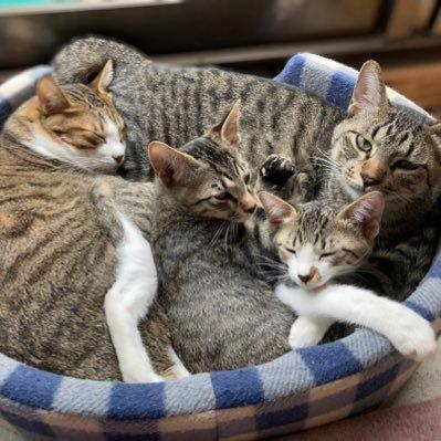 4匹の猫ちゃんズ@主は猫大好きマン🐱