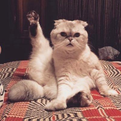 SoCal   she's still 23 inside her fantasy   cruel summer stan   cat lover  #SeniorSwifties