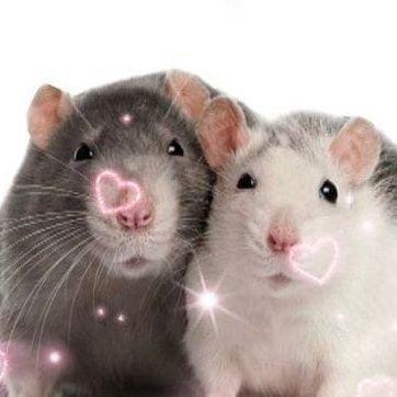 👑 Крыса по имени Гоголь. (@Vagina_syrka)