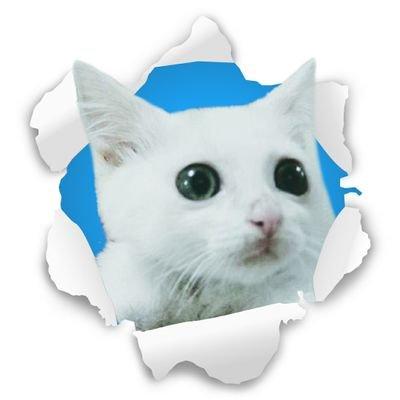 白猫ミルコ @mirko_cat