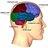 Head And Brain | Brain Injury Litigation Network