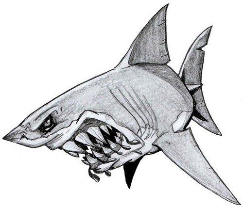 shark gaming fr sharkgamingfr twitter shark gaming fr