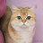 SunRay Cat News