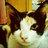 cat_141