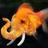 Goldfischfant