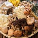 mushroom2044