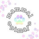 mammal_animals