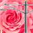 rosecitytransit's avatar