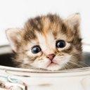 cat_lovelove