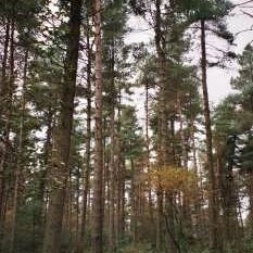 forestryhour