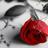 la rosa espinosa
