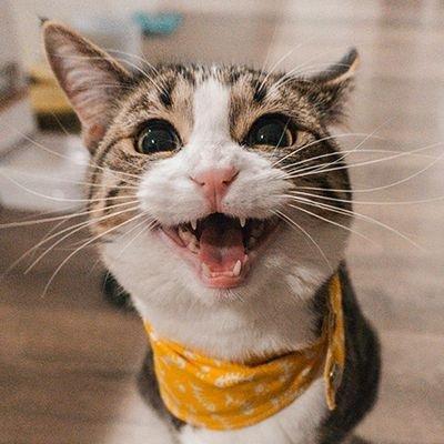Crypto Cat 🐱 🌶