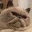 Cat scarves: So in this season! http://t.co/onn5QBj4