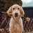 @MyTrophyDog Profile picture