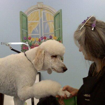 Roni koepp ronirocks twitter for A cut above pet salon