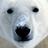 Βολική Αρκούδα