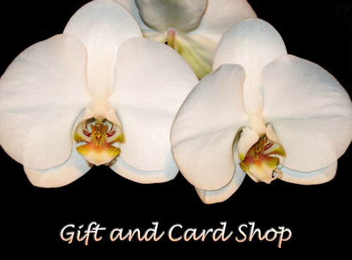 Gift and Card Shop