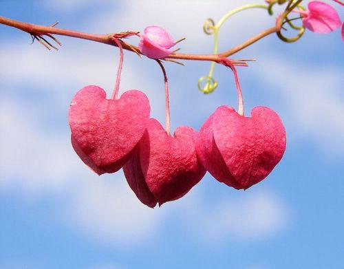 Hasil carian imej untuk hati