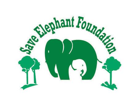 Save Elephants (@Saveelephant) | Twitter