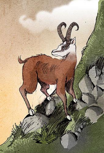 Tamarou LLC avatar