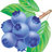 Blueberry normal