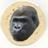 GorillaTortila