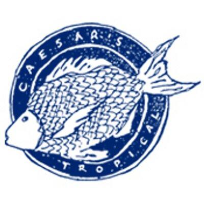 Caesars tropicalfish caesarstropical twitter for Caesars tropical fish