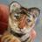 Judy Johnson - BayColony_Cats