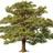 Tree normal