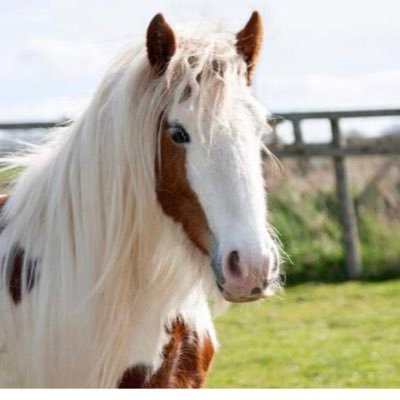 The Los Angeles Alliance for Animals (LAAA) is an all volunteer, grassroots group formed to end exploitative pony and horse rides in the LA area