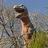 The Dinosaur That Roared