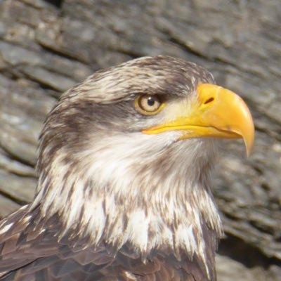 Eagle eye 🚜🚜🚜🇬🇷🇮🇱