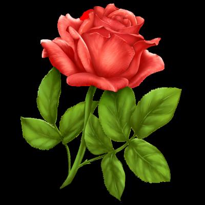 Rose icon 400x400