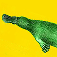 Domestic Platypus
