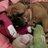 Miley French Bulldog