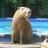 Dobby the Capybara