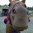 annie4horses