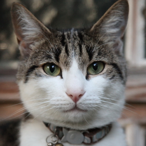 Master Killer Cat   ma...